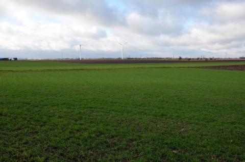 Elektrownia wiatrowa Witkowo - monitoring ornitologiczny