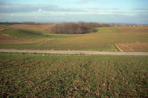 Farma wiatrowa Koszyce - screening ornitologiczny