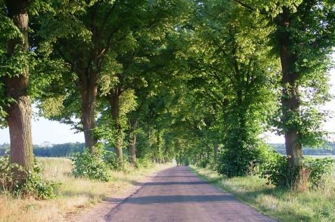 Farma wiatrowa Kuślin - monitoring chiropterologiczny