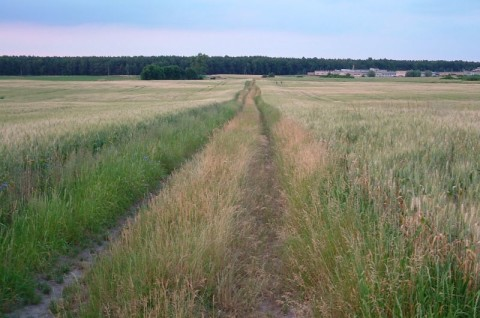 Farma wiatrowa Pniewy - monitoring chiropterologiczny