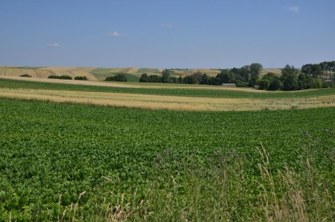 Farma wiatrowa Tyszowce - monitoring chiropterologiczny