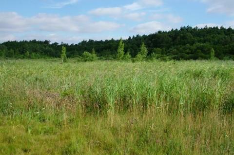 Nadleśnictwo Nowe Ramuki - inwentaryzacja przyrodnicza