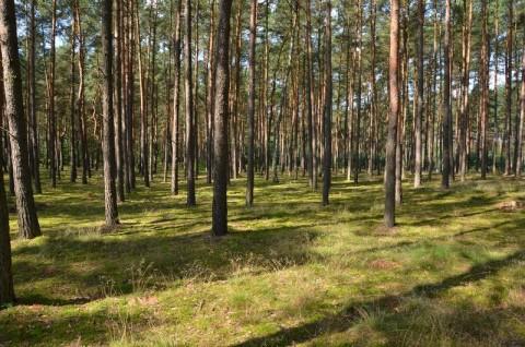 Park Krajobrazowy Puszcza Zielonka - inwentaryzacja przyrodnicza