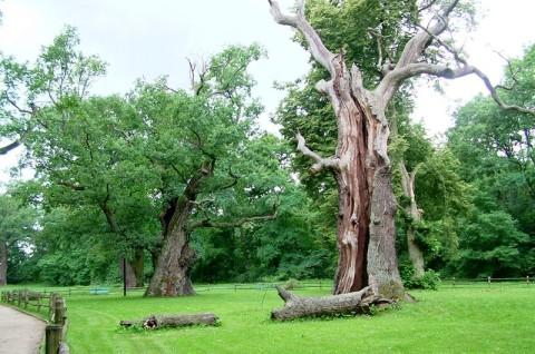 Rogaliński Park Krajobrazowy - plan ochrony dla parku krajobrazowego