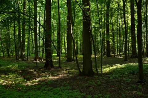 Żerkowsko-Czeszewski Park Krajobrazowy - inwentaryzacja przyrodnicza