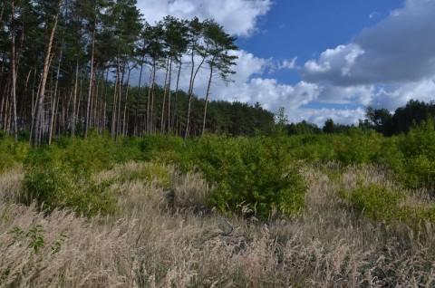 Zmiana sposobu użytkowania działki z leśnego na rolny w Nochowie - inwentaryzacja przyrodnicza