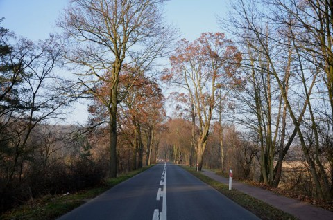 Droga powiatowa nr 2490P w Puszczykowie - inwentaryzacja dendrologiczna