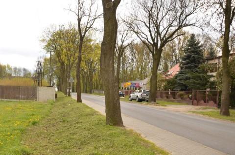 Droga powiatowa nr 2147P w Pobiedziskach - inwentaryzacja dendrologiczna