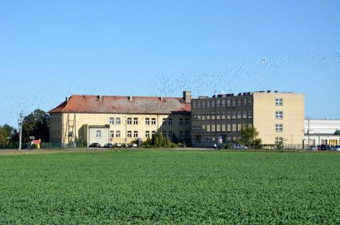 Zespół szkół w Kleszczewie - opinia chiropterologiczna