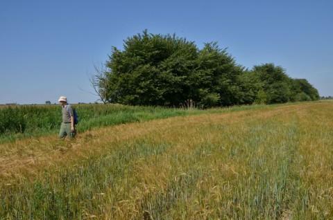 Inwentaryzacje przyrodnicze - agrocenoza