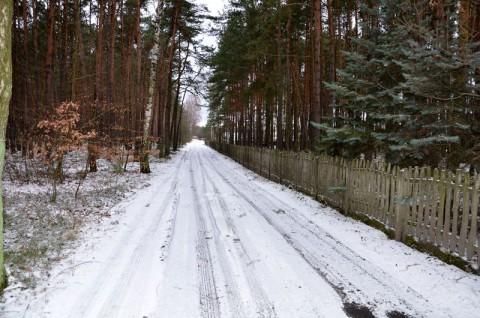 Ulica Bukowa w Ostrzeszowie - inwentaryzacja dendrologiczna