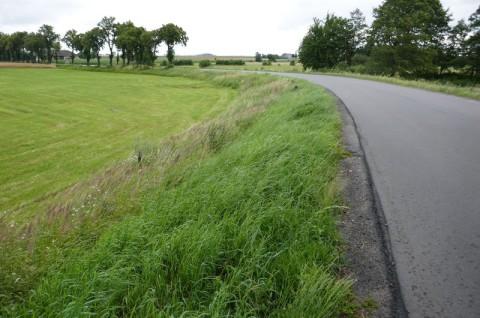 Droga powiatowa nr 5323P pod Odolanowem - inwentaryzacja przyrodnicza