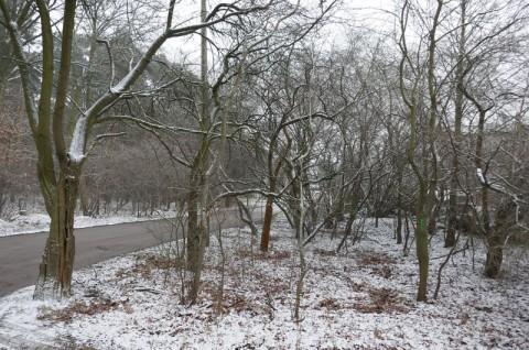Ulica Jeżynowa w Czerwonaku - inwentaryzacja drzew i krzewów