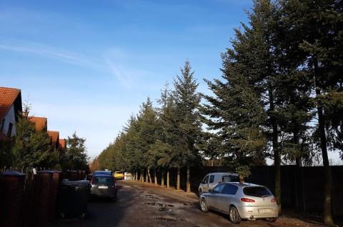 Droga powiatowa nr 2410P Gowarzewo-Zalasewo - inwentaryzacja dendrologiczna