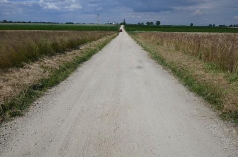 Droga gminna w Szkudle - inwentaryzacja przyrodnicza