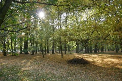 Park Radolińskich w Jarocinie - ekspertyza ornitologiczna