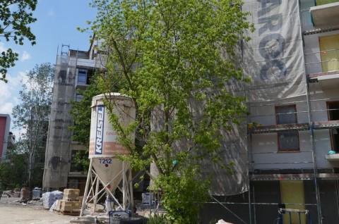 Zespół budynków mieszkalny wielorodzinnych w Poznaniu - ekspertyza ornitologiczna
