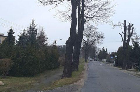 Droga powiatowa nr 2400P Rokietnica-Sobota - inwentaryzacja ptaków