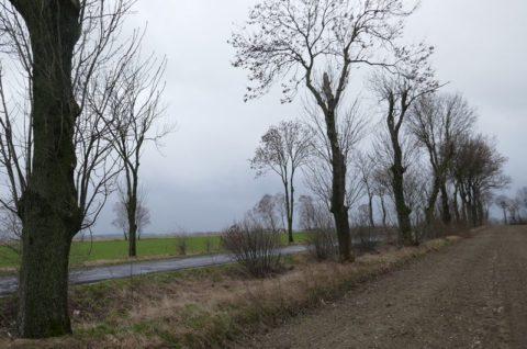 Droga powiatowa nr 5297P Górzno-Gutów - inwentaryzacja dendrologiczna