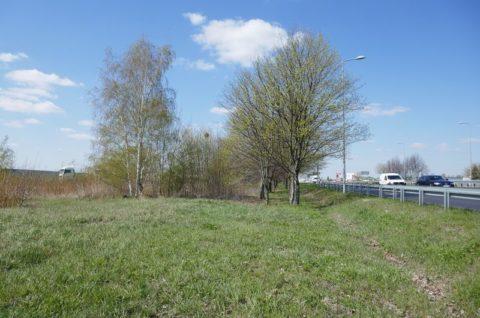 Droga serwisowa w rejonie nr drogi krajowej nr 92 i węzła Swarzędz Jasin - inwentaryzacja dendrologiczna