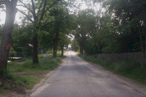 Ulica Lipowa w Potaszach - nadzór ornitologiczny