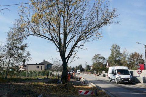 Przebudowa pasa drogowego w zakresie jezdni, chodników i ścieżki rowerowej na ulicy Dworcowej w Golęczewie, Chludowie oraz Zielątkowie - inwentaryzacja dendrologiczna