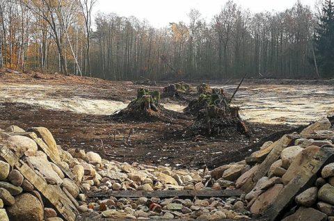 Zastawka piętrząca na rowie w Leśnictwie Gołuchów - nadzór herpetologiczny