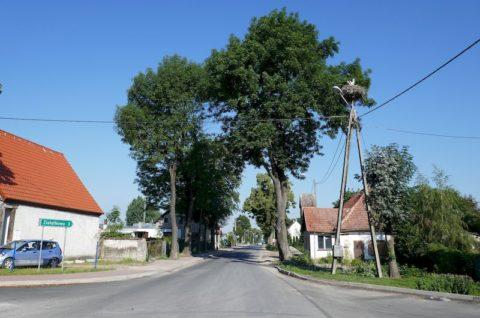 Droga powiatowa nr 2428P Golęczewo-Sobota - opinia przyrodnicza
