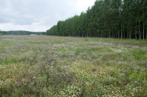 Zakład przetwórstwa drzewnego wraz z infrastrukturą towarzyszącą w Chorzelach - inwentaryzacja przyrodnicza