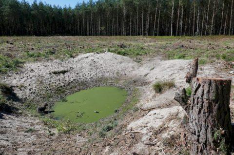 Zbiornik wodny w Leśnictwie Miłaszka - nadzór herpetologiczny