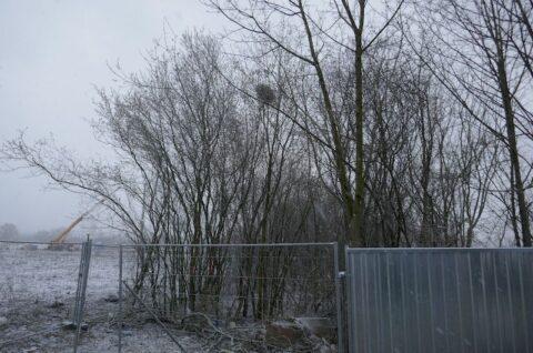Droga lokalna łącząca ulicęAnnę Jantar z ulicąCzesława Niemena w Poznaniu - Ekspertyza ornitologiczna