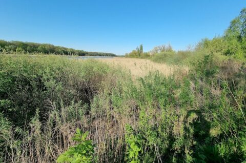 Ścieżka naturalna pieszo-rowerowa wzdłuż brzegu Jeziora Swarzędzkiego - Ocena oddziaływania przedsięwzięcia na obszar Natura 2000